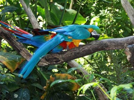 Aras im Vogelpark von Foz do Iguacu