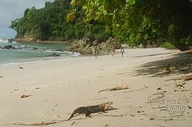 Tropischer Strand an der Küste von Costa Rica