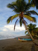 Palmen am Strand von Costa Rica in Mittelamerika