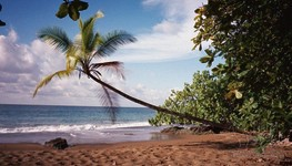 Palmen am Strand von Costa Rica