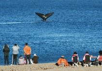 Whale Watching und Naturtourismus in Patagonien