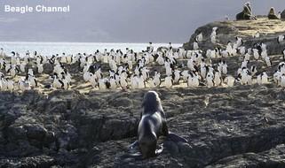 Argentinen Urlaub Besuch einer Pinguinkolonie im Beagel Kanal
