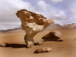 Biolivien Atacama Wüste Pedra de arbol