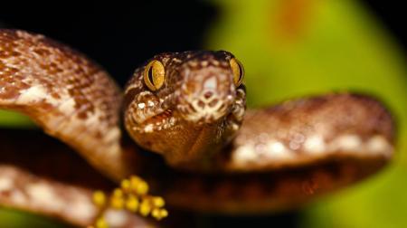 Schlange in Brasilien
