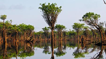 Landschaft im Amazonas Regenwald