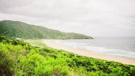 Atlantischer Regenwald bei Florianopolis