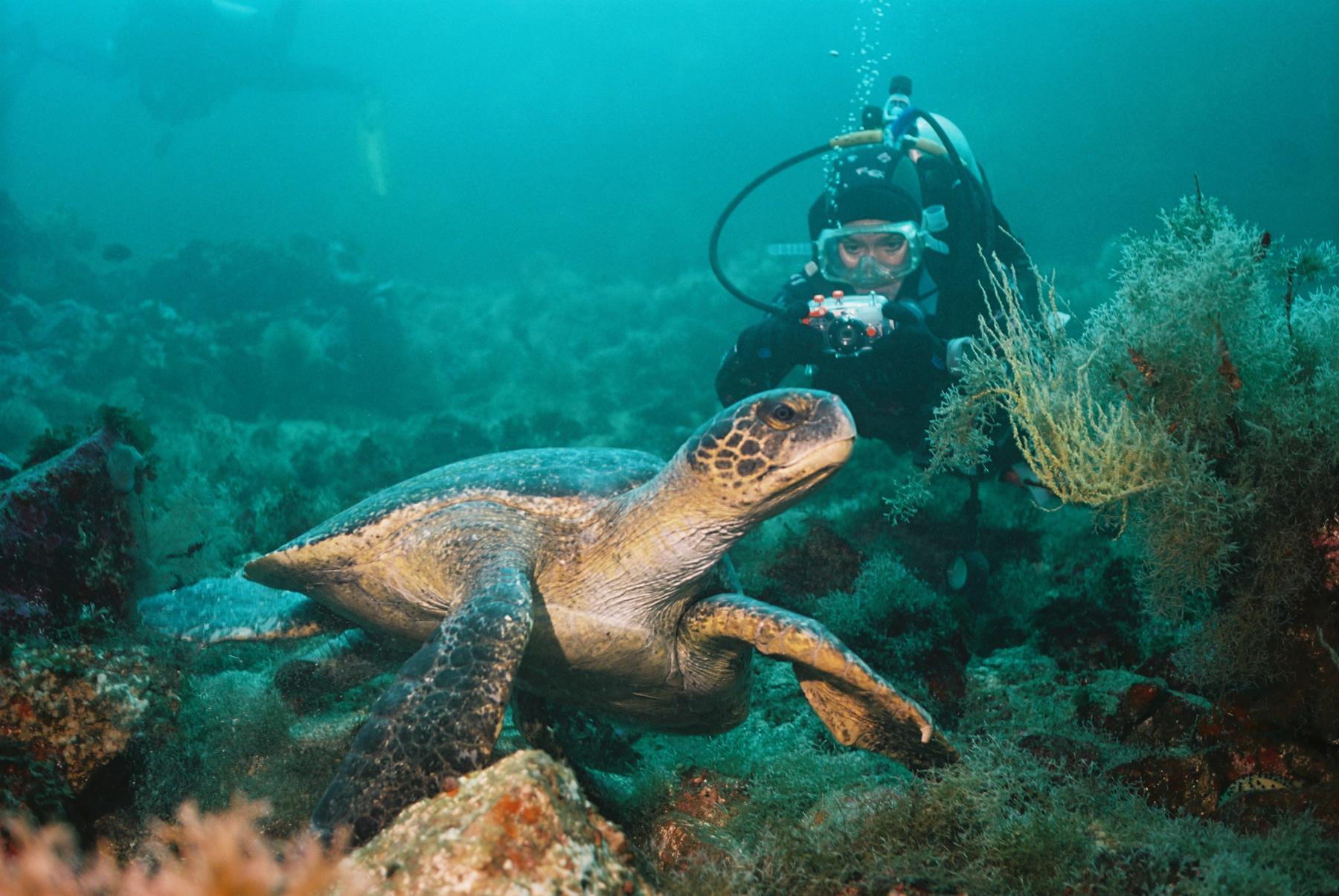Taucher mit Schildkröte