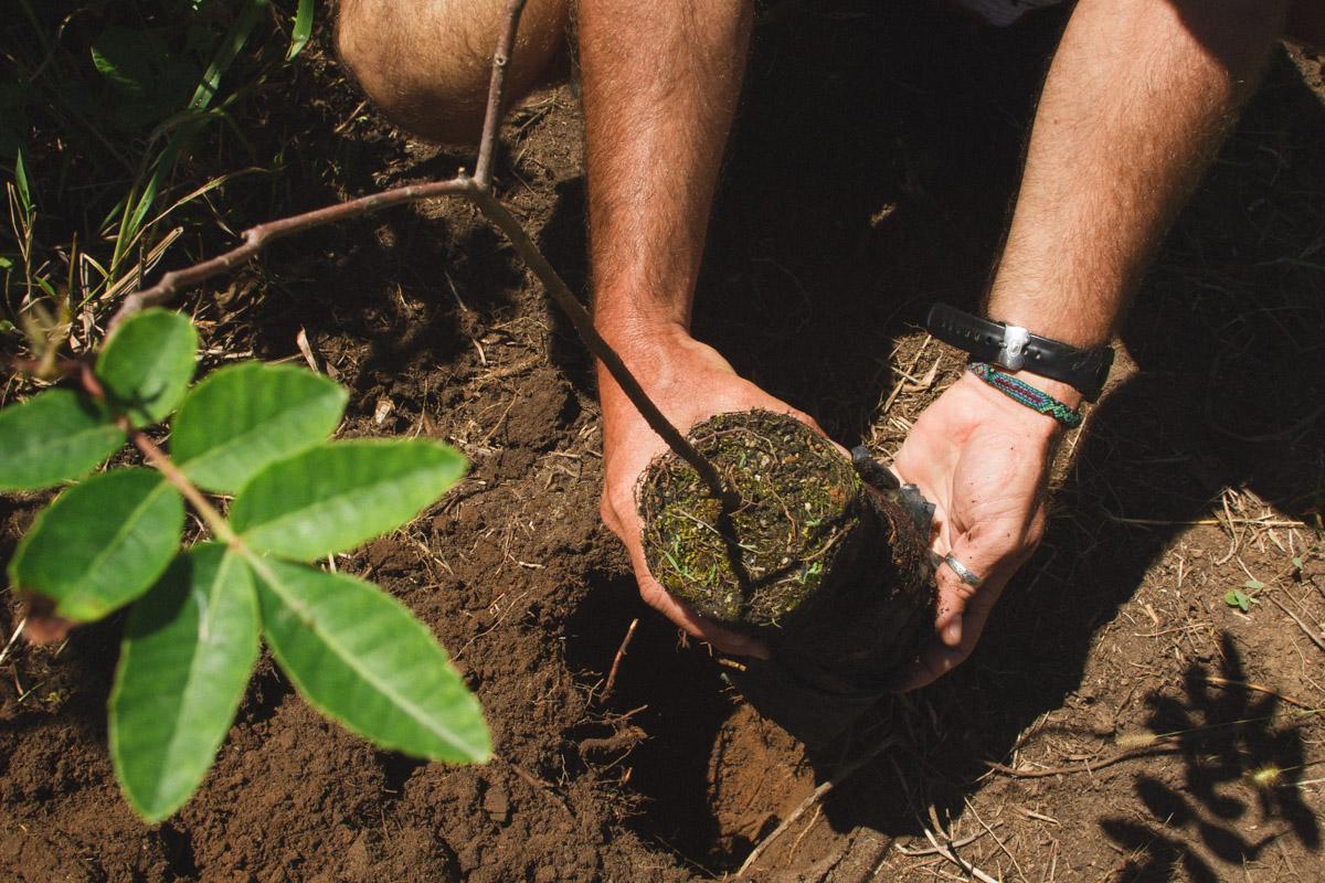 Salve Floripa schützt den Atlantischen Regenwald in Florianopolis