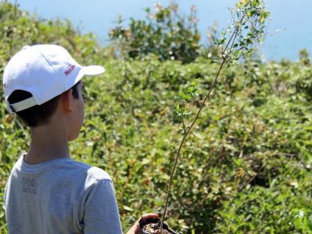 Ein Junge pflanzt einen Baum auf der Insel Florianopolis in Brasilien