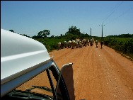 Auf der Straße im Pantanal