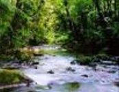Wasserlauf in Atlantischem Regenwald