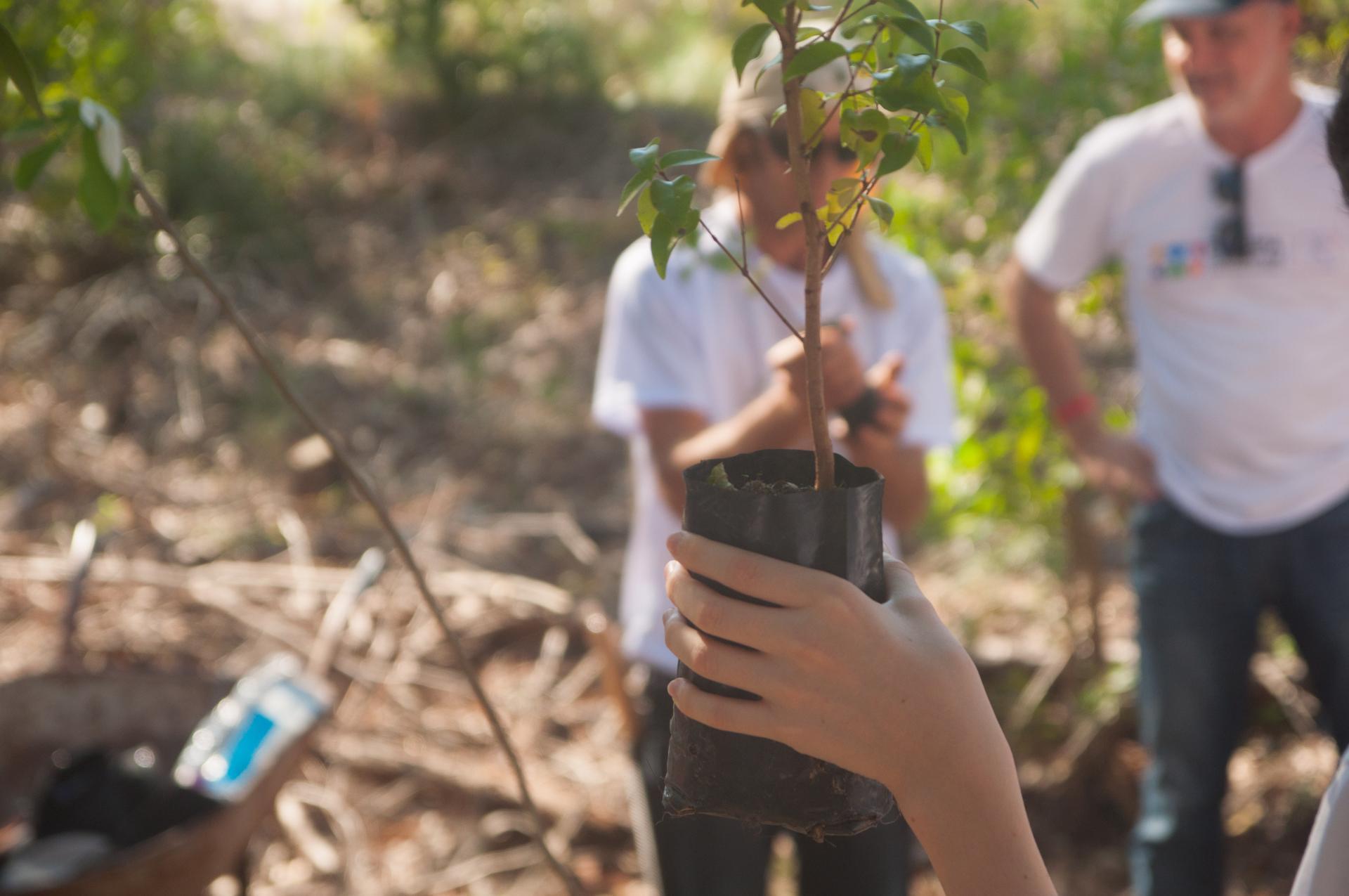 Junger Brasilianer planzt einen jungen Baum für Salve Floripa