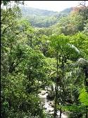 Fluss zieht sich durch grüne Mata Atlantica