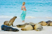 Wildlife im Natur Paradies Galapagos Inseln in Ecuador