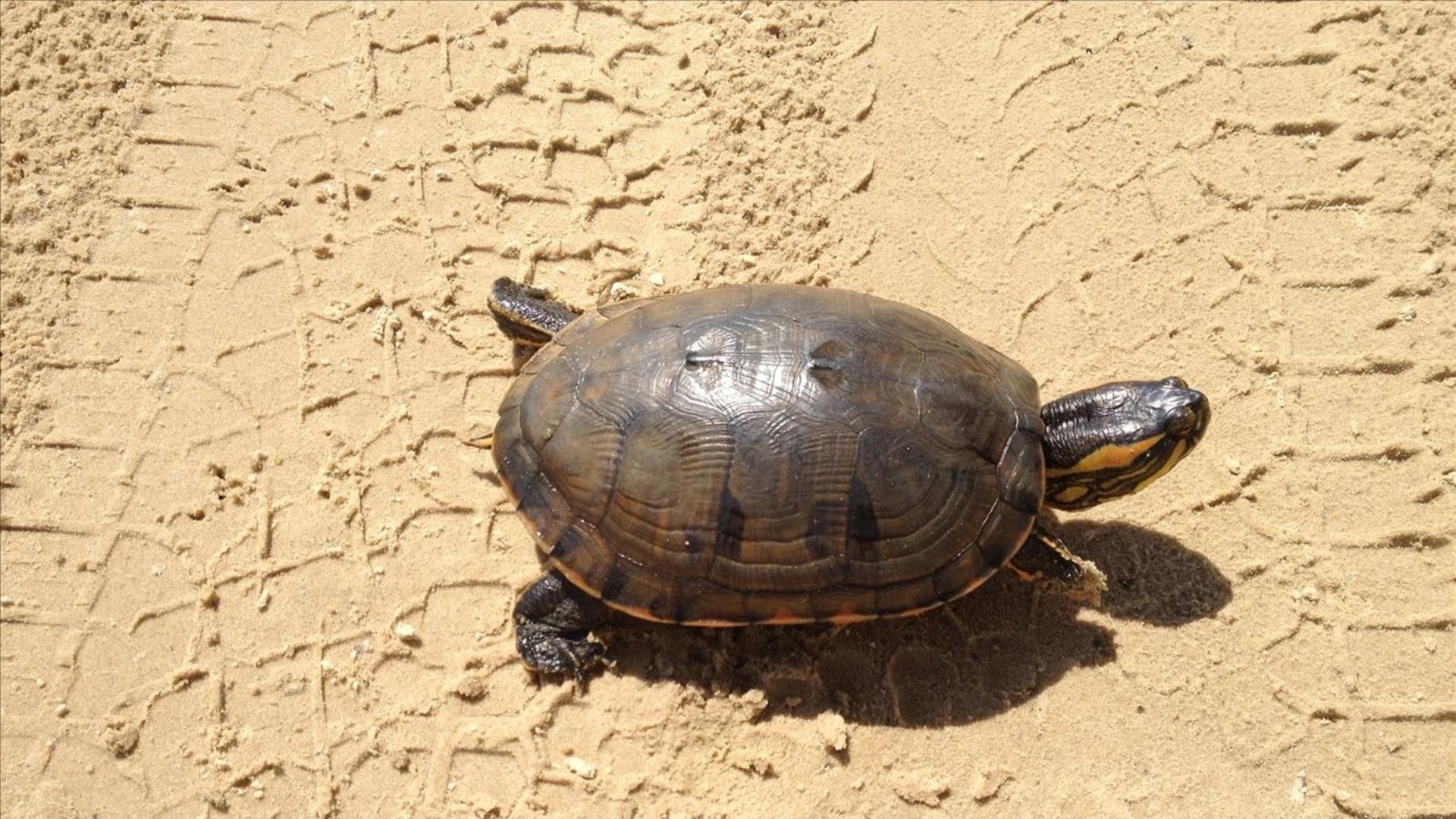 Brasilien Bahia Praia do Forte: Tagesausflug - Besuch des TAMAR Meeresschildkröten Projekts