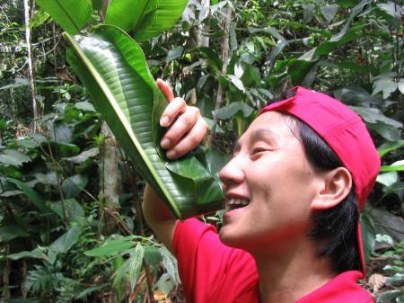 Gast mit Palmenblatt im Regenwald bei Estaleiro