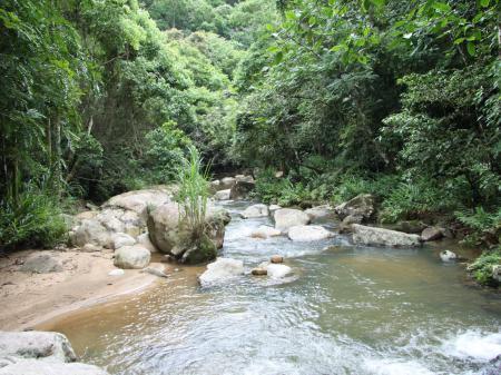 Natur pur im Regenwald bei Estaleiro