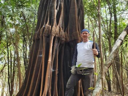 Baum mit interessanten Wurzeln im Amazonas-Regenwald