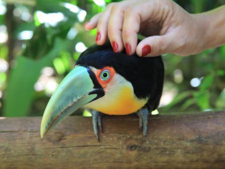 Zutraulicher Vogel im Vogelpark Foz do Iguacu