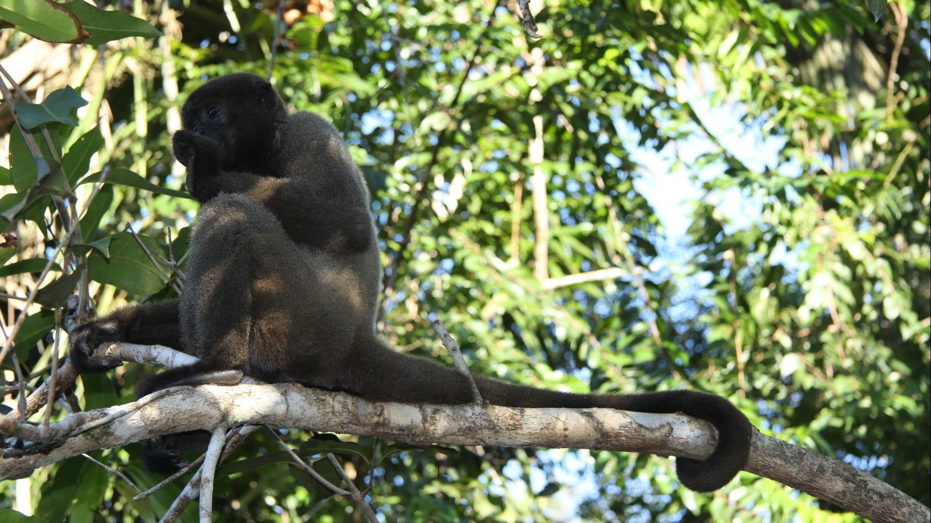 Brasilien Amazonas: 5 Tage Reisebaustein - Turtle Lodge Buriti Paket
