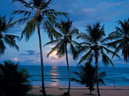 Sonnenuntergang zwischen Palmen an einem Strand in Boipeba, Bahia