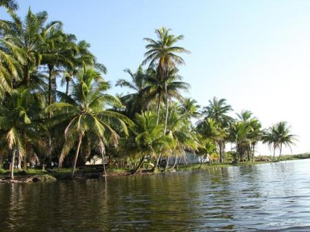 Palmen wachsen direkt an das Wasser auf dem Weg zur Insel Boipeba, Bahia