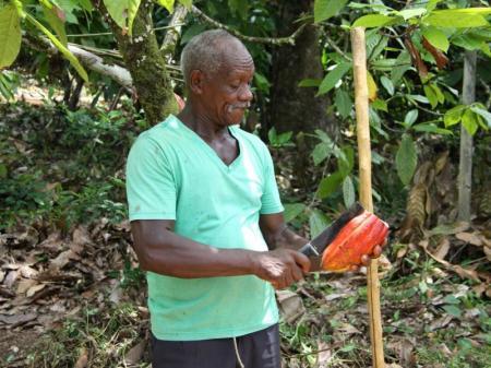 Ein Bahiano öffnet mit der Machete eine Kakaofrucht