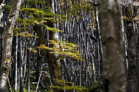 Entdecken Sie den bezaubernden Lenka Wald im Torres del Paine Nationalpark in chile