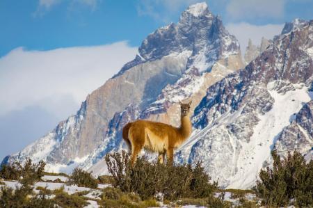 Reisen Sie durch Patagonien in Chile und beobachten Sie die einzigartige Tierwelt