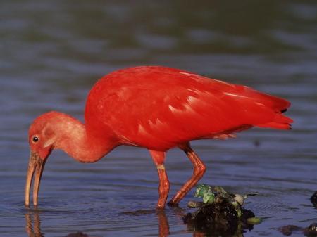 Erleben Sie eine faszinierende Tiersafari in den venezolanischen Tiefebenen Los Llanos