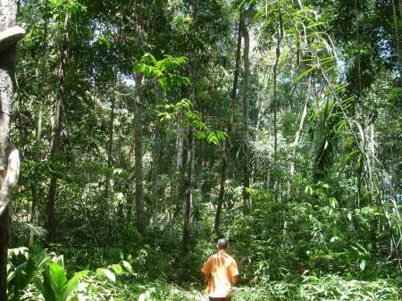 Erleben Sie die atemberaubende Natur Venezuelas in der Umgebung um Caura