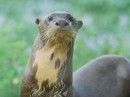 Fahren Sie mit uns auf eine unvergessliche Tiersafari in Los Llanos in Venezuela