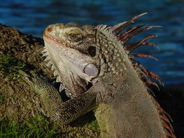 Ein Tier in Los Llanos bei einer Reise durch Venezuela.