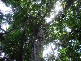 Urwald bei einer Reise durch Venezuela.