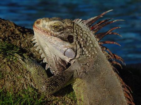 Entdecken Sie exotische Tiere auf einer Tour durch Los Llanos in Venezuela