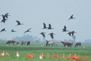 Los Llanos Vögel