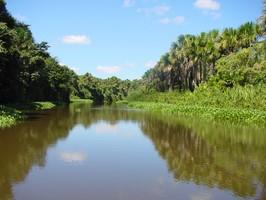 Ein Fluss des Orinoco Delta bei einer Reise durch Venezuela.