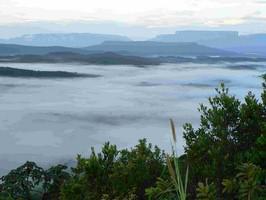 Gran Sabana Nebel
