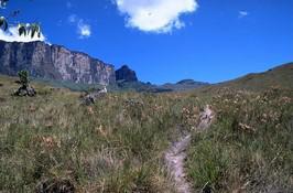 Gran Sabana Weg