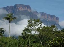 Auyan Tepui bei einer Reise durch Venezuela.