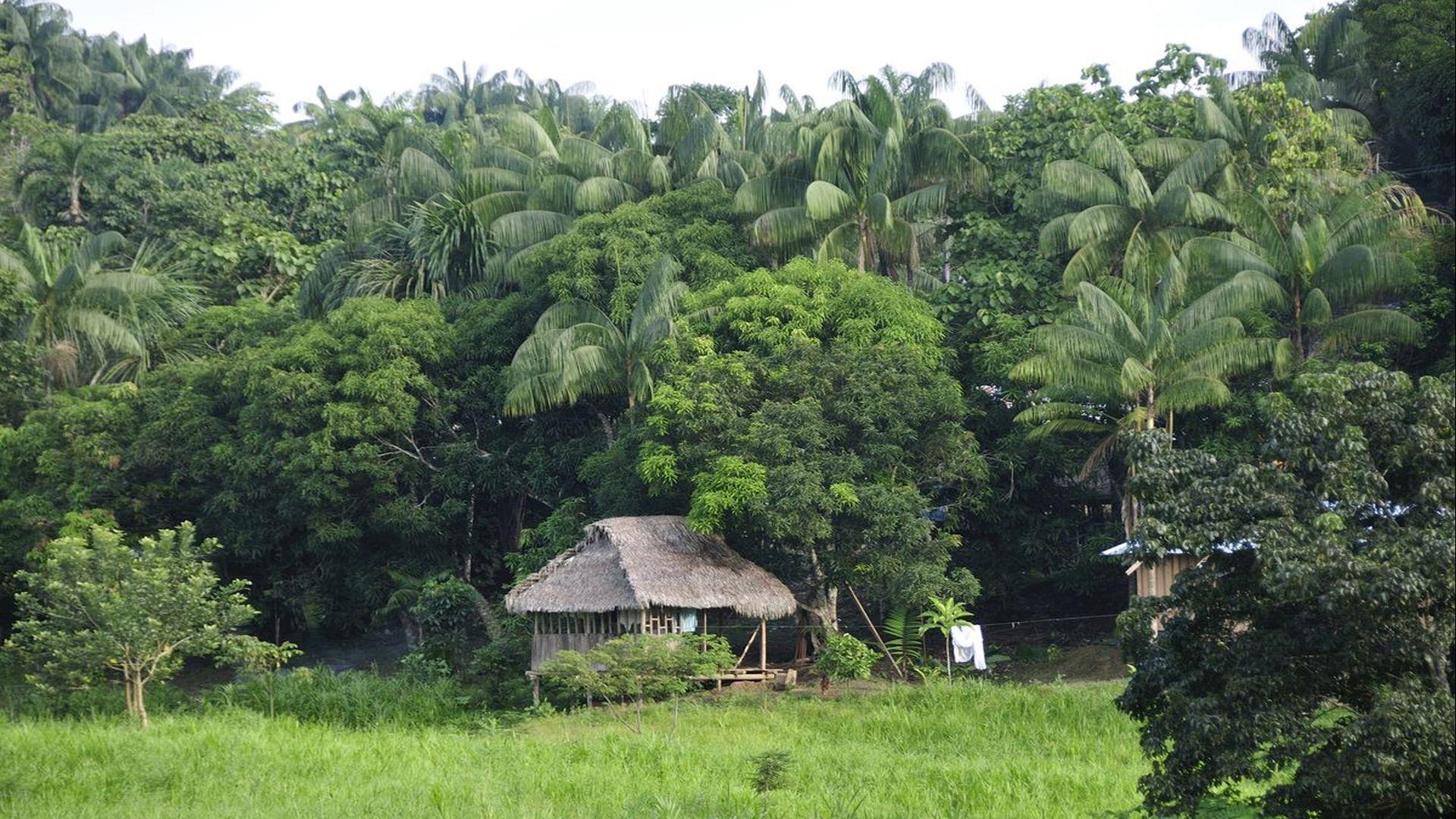 Kolumbien / Amazonas: 5 Tage Reisebaustein - Den Amazonas hautnah erleben