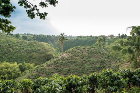 Wanderungen durch die Kaffeezone in Kolumbien unternehmen