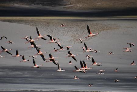 Begeben Sie sich auf einen Ausflug zur Laguna Grande im Norden Argentiniens