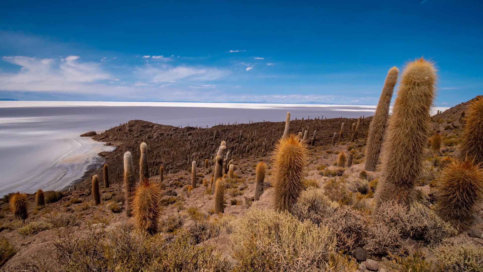 Erleben Sie die Uyuni Salzwüste auf einer Rundreise in Bolivien