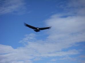 Cruz del Condor (1)