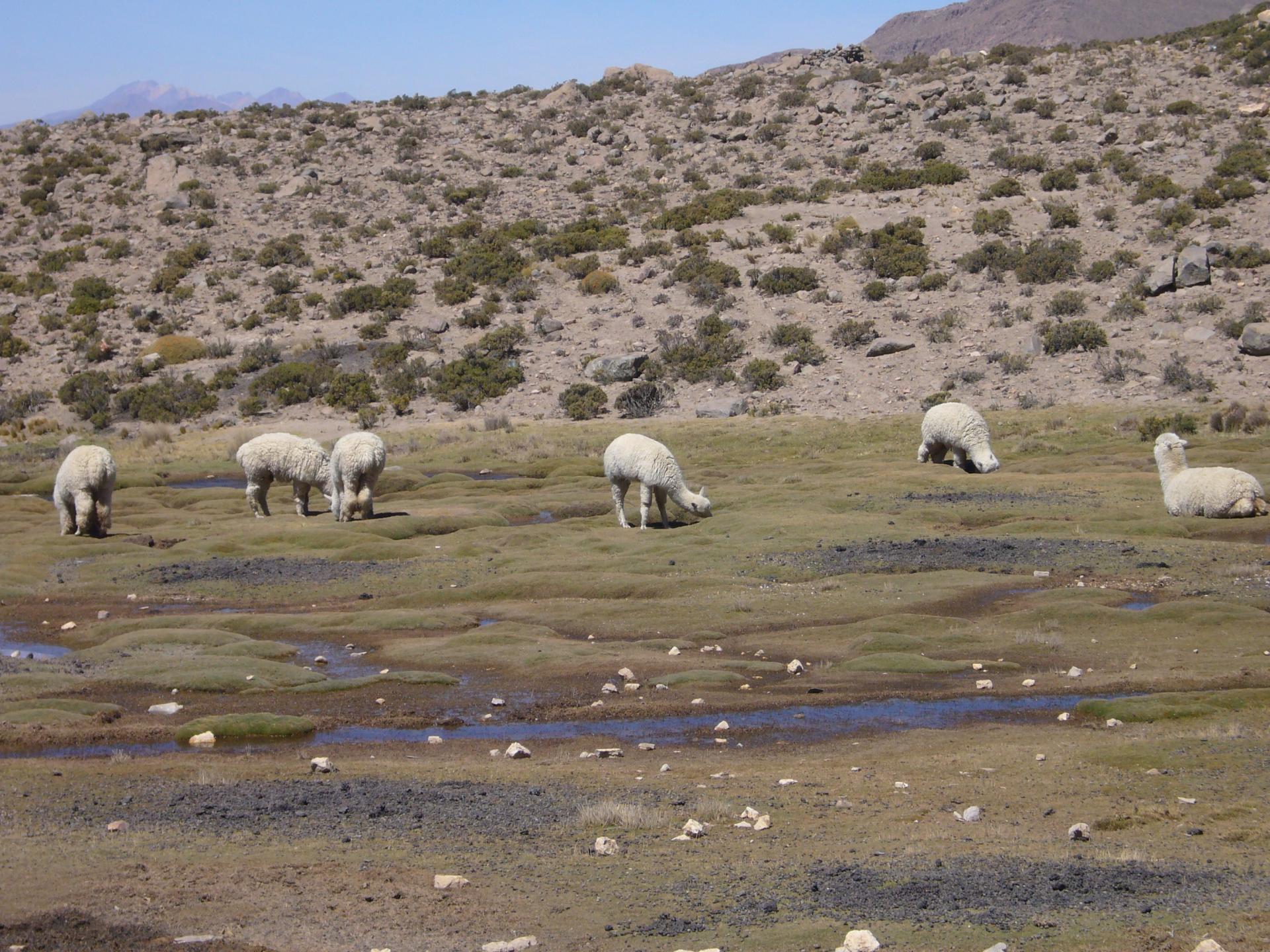 Erleben Sie die Anden Perus auf einer Rundreise