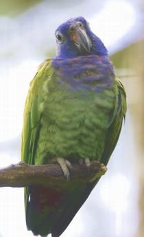 Ecuador Rundreise Vogel