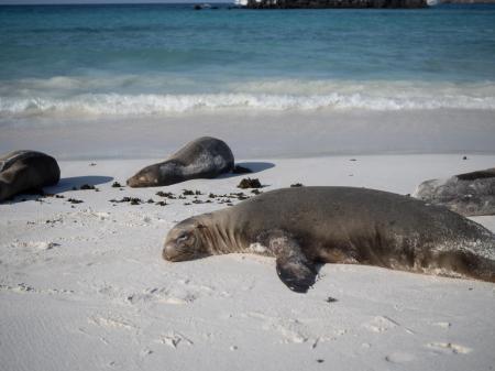 Entdecken Sie die Tierwelt der Galapagos Inseln auf Ihrer Rundreise mit uns