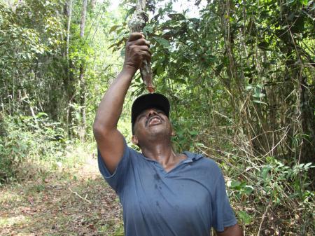 Wassergewinnung aus einer Liliane im Atlantischen Regenwald