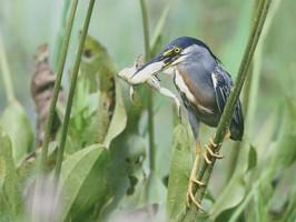 Los Llanos Vogel